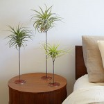 air-plant-bedside-decor-sun-0116-l