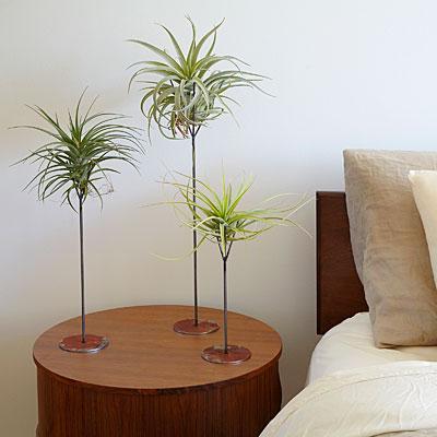 air-plant-bedside-decor-sun-0116-l