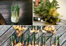 Овочі, які можна виростити вдома