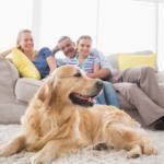 облаштування-зони сімейного відпочинку